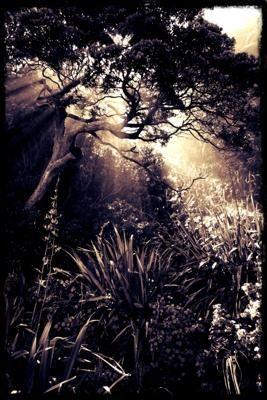 Sunlight through Pohutukawa, by Steve Bloxham    Part of: NZ photo contest April 2012