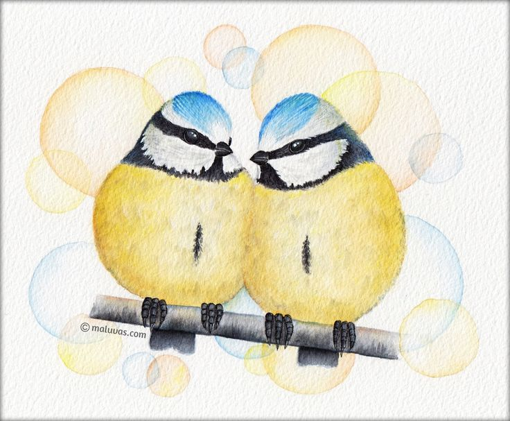 Blue tits - 52 Week Illustration Challenge - 02 Feathered animals. Inktense pencils on watercolor paper. #illo52weeks