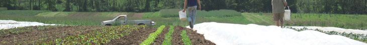 turning your compost by temperature may result in a better product than doing it by time intervals