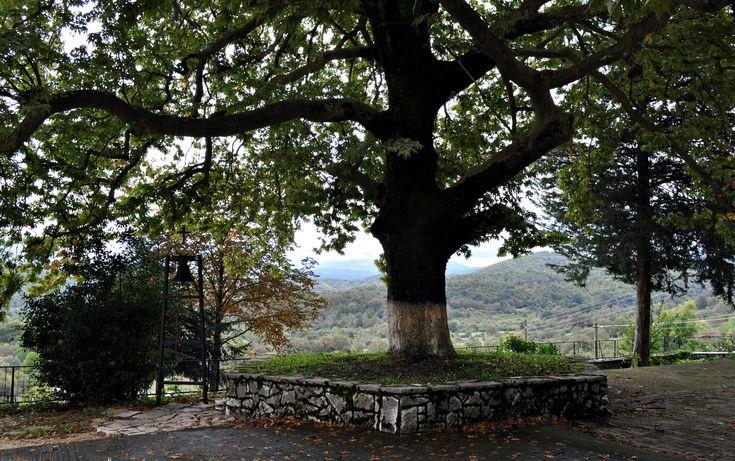 https://flic.kr/p/Aw9JzN | Pogoni, Epirus, Greece
