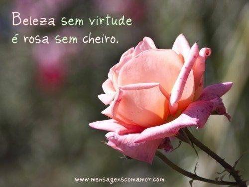 Beleza sem virtude é rosa sem cheiro.