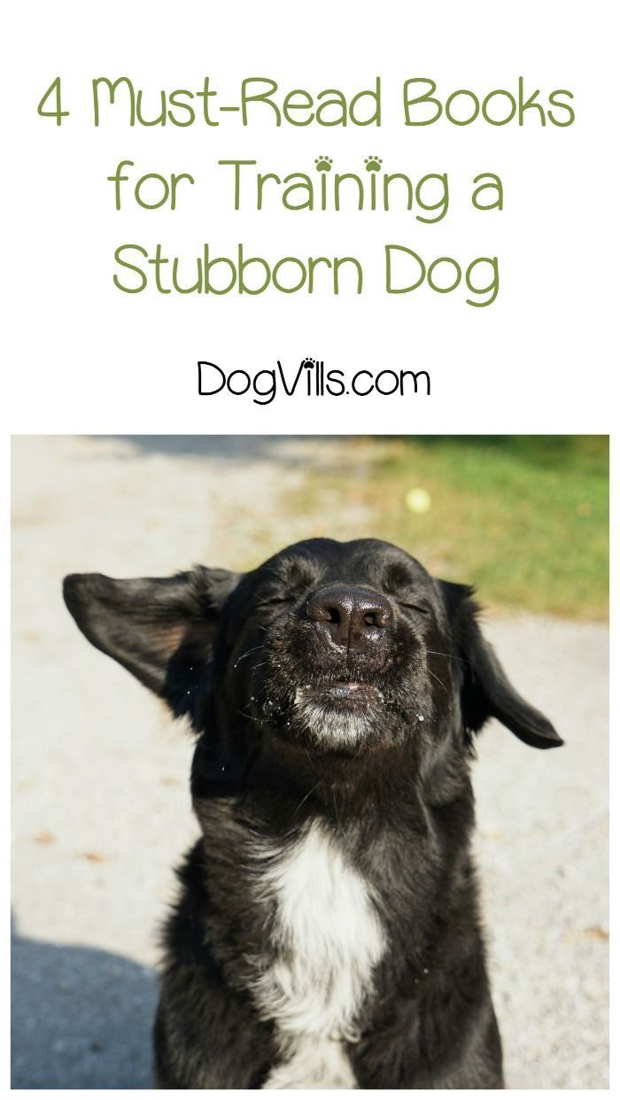 Got a stubborn pooch? Check out four great books to read about training challenging dogs!