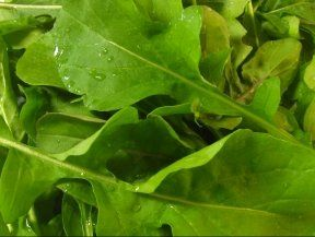 1000 Arugula Seeds Rocket Salat Roquette Heirloom Variety >>> You can get additional details at the image link.(This is an Amazon affiliate link and I receive a commission for the sales)