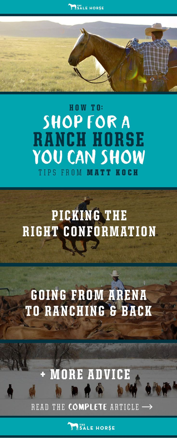 Matt Koch doesn't think the line between ranch horse and show horse needs to be complicated. Some people think a horse has to be either a ranch horse or a show horse, but cowhorse trainer Matt Koch believes in simplifying that divide. The Sale Horse asked Matt how to shop for horses to take us from the show pen to the branding pen.