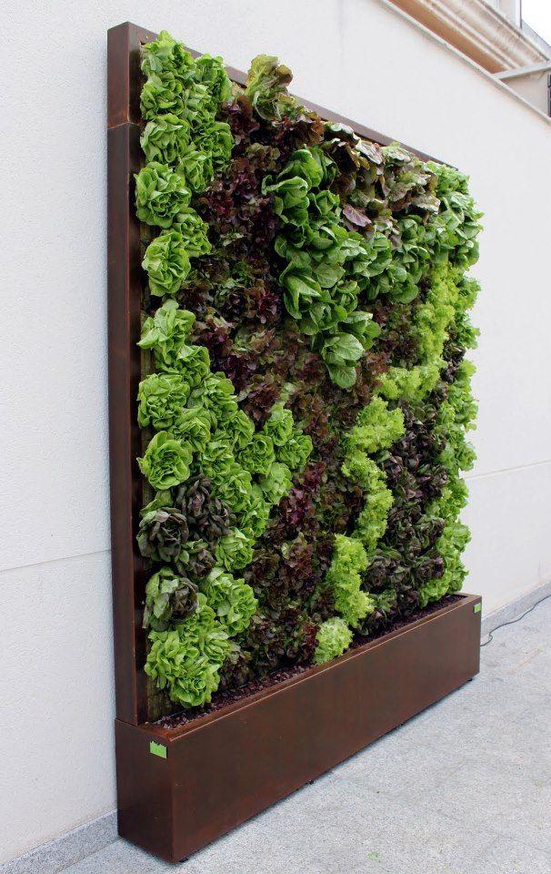 Lettuce wall. Si fuera viable tener nuestra mini huerta en un jardín vertical estaría genial!
