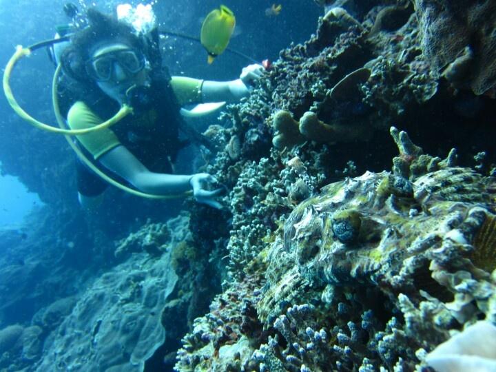 Lucky me! Ikan Buaya at Bunaken, North Sulawesi