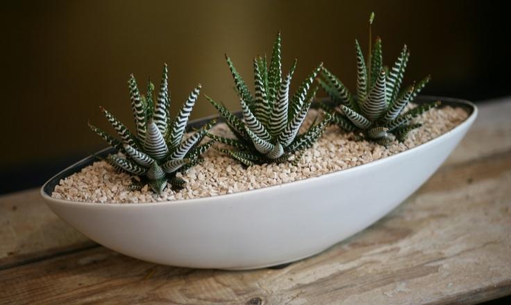Plants | DIRT Design Studio Dallas Flowers and Design