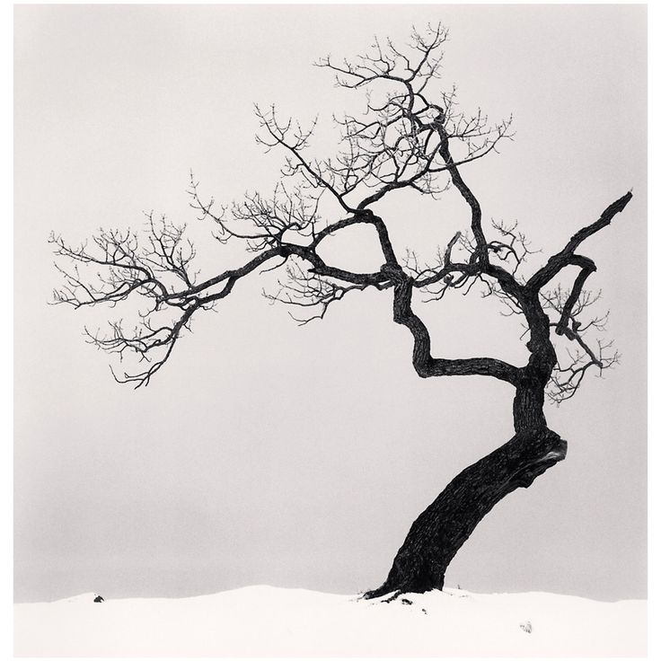 """Kussharo Lake Tree, Kotan, Hokkaido, Japan"" by Michael Kenna 