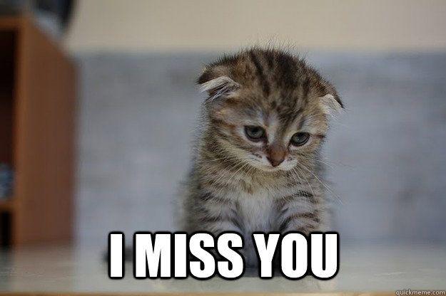 Funniest Miss You Meme : I miss you sad kitten dad pinterest