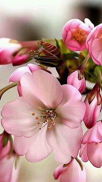 Flora – Blumen II – #Flowers #Flora