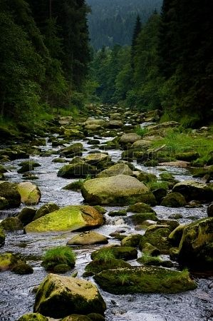 Stony bed of the river which is called Vydra