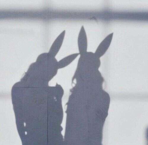 bunny, shadow, and tumblr image