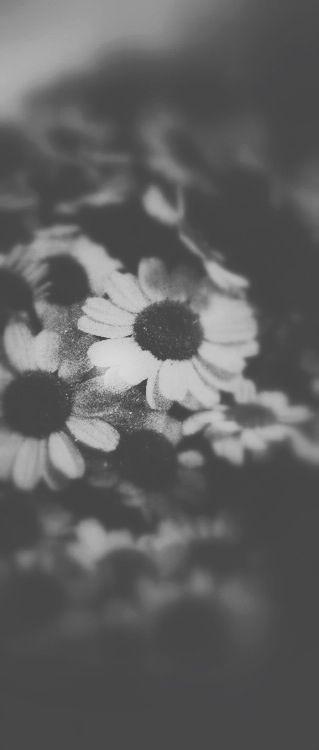 IL MIO GIARDINO Alcuni giorni hanno il rumore del silenzio, impilano i profumi, e i colori, e i sapori, come fiori, o ciliegie, nere, lucide, simboli interni di un pensiero che apre le gambe, maledetta, o se vuoi le porte, petali, come labbra, mi scivoli dentro, e Io che prendo a piccoli morsi le parole, mentre passeggi nel mio giardino con la lingua tra i denti.   http://paralleluniverseinpolaroid.wordpress.com