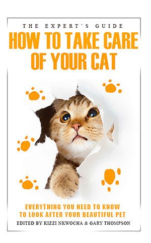 Cat Illnesses: Symptoms to Watch For