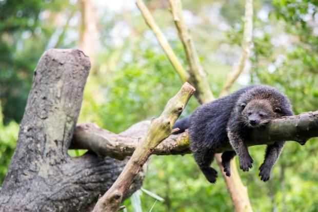 7 Animals That Smell Like Gourmet Jelly Beans | Mental Floss
