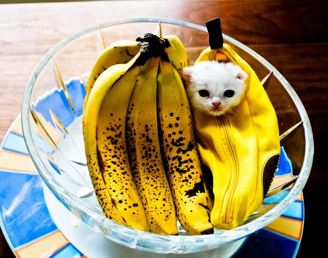 there is a kitten in the bananas......disguised as a banana............my life is complete.