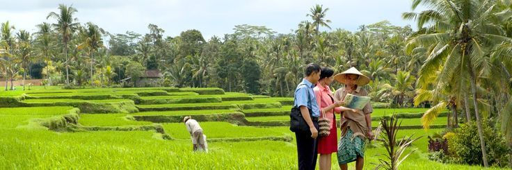 Bali, Indonesia​—Teaching the Bible to a worker on rice terraces near the town of Ubud