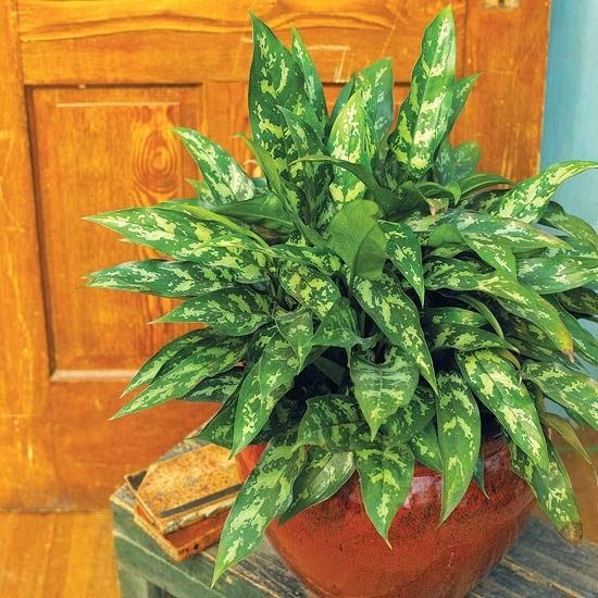 M s de 25 ideas fant sticas sobre plantas de poca luz en for Plantas de interior que necesitan muy poca luz
