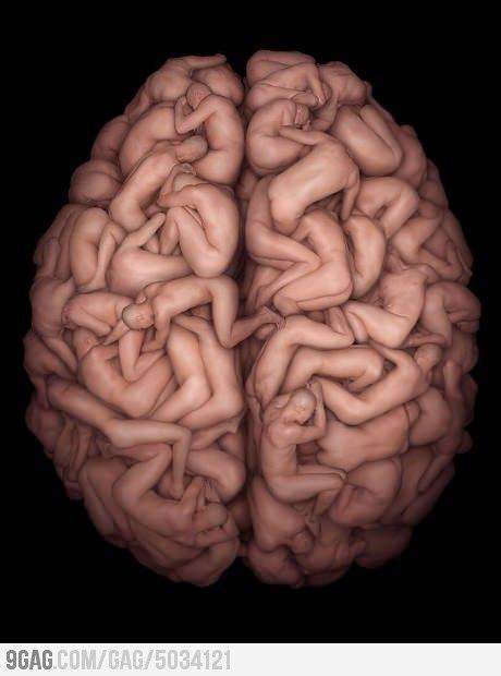 Human Brain, body, photo