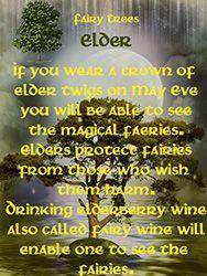 Fairy Tree - Elder