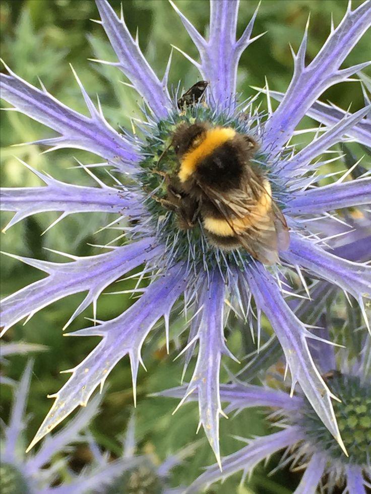 Jill Freestone image English Bumble Bee c2015