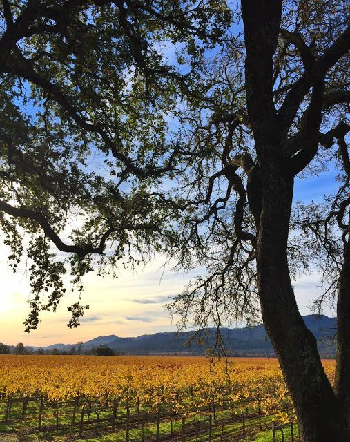 7 things to do in the wine country -    The California wine country is most definitely a wonderful spot to sit and stay awhile.    From r...