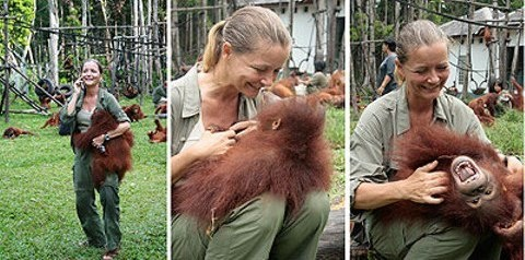 Lone Droscher-Nielson was a SAS flight attendant from Denmark and now manages the largest primate project in the world.  It began when she vacationed at a compound in Borneo's Tanjung Puting National Park.  She said she had no choice after she saw the malnourished, intelligent, childlike orangutans with outstretched hands and pleading eyes.  She had to save them.  She founded the Nyaru Menteng Rescue and Rehabilitation Center in 1999 and makes her home there with her beloved orangutans.