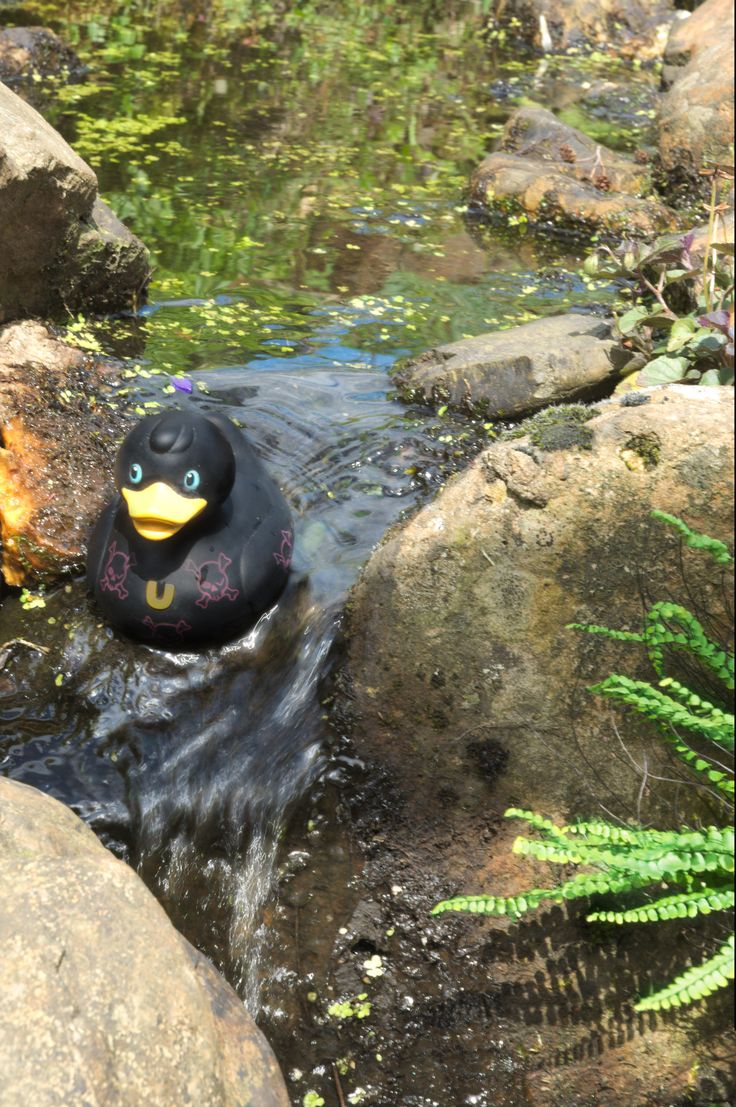 The adventures of a black rubber duck. In the waterfall.