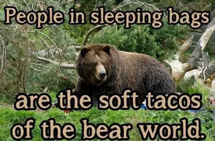 Bear Meme People Sleep Memes Amp Comics Pinterest Sleep People And Bear Meme