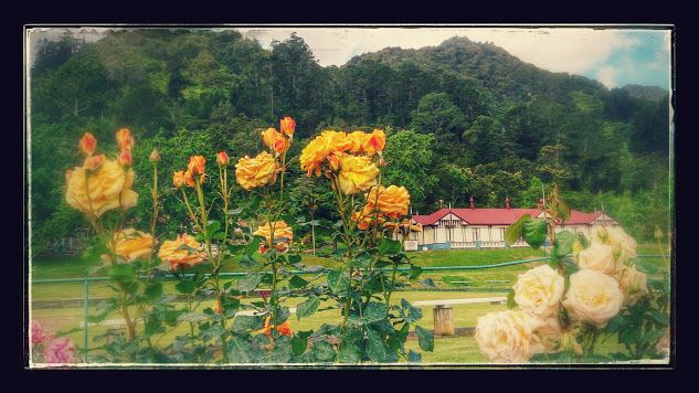 Te Aroha Domain, with hot mineral spa pools. Bush walking tracks. Mountain Of Love, Te Aroha, Waikato, #NewZealand #NZ