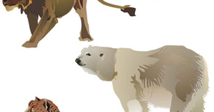 Nombres de animales en peligro de extinción. Por todo el mundo, varias especies de animales están en riesgo de extinción. La razón de tal incluye la pérdida del hábitat, la introducción de especies no nativas en un área y el exceso de caza o cosechas. Cada vez que una especie desaparece esto impacta la biodiversidad. Considera que, de acuerdo a la World Wildlife Organization, un tercio de ...
