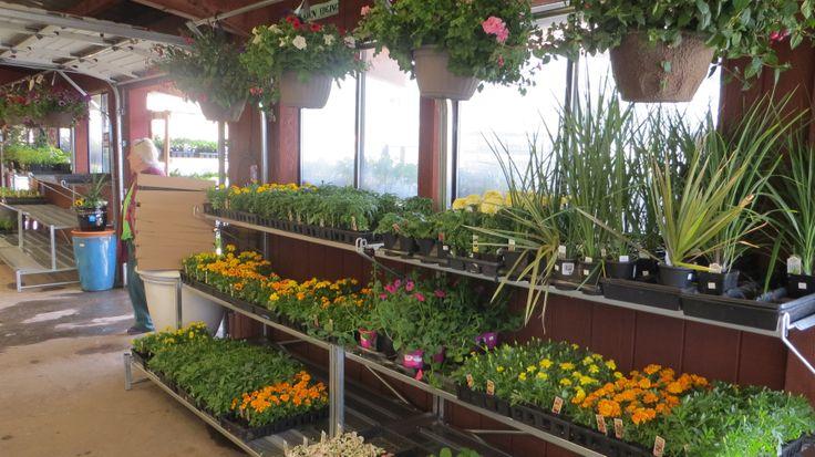 Pretty plants on our new metal plant racks