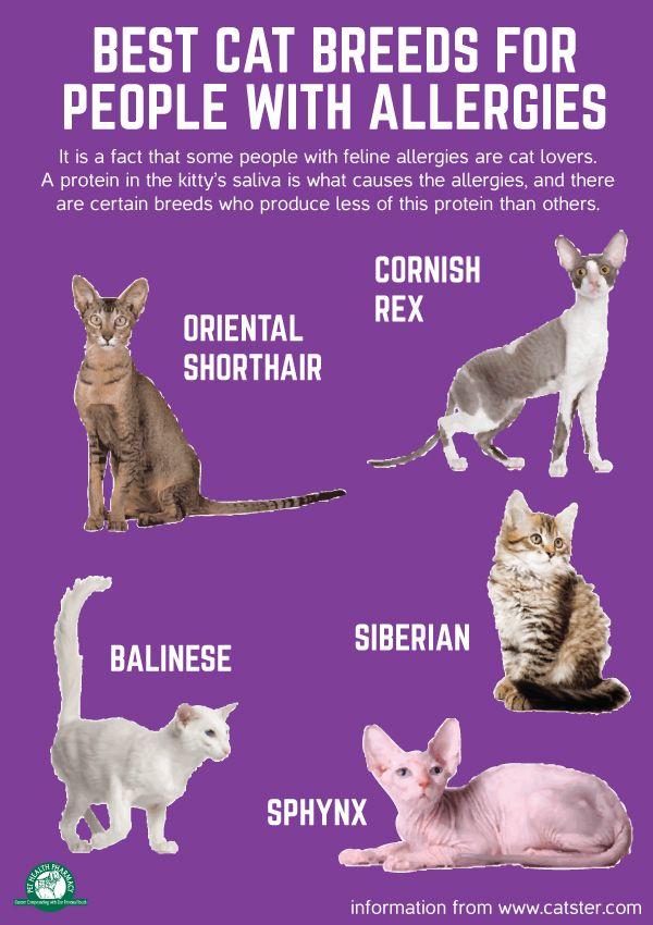 creatinine in cats