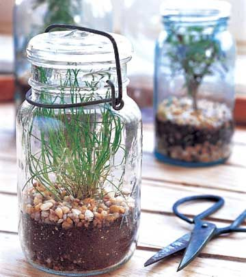 Vintage mason jars are the ideal containers for a kitchen herbarium.    Almost any herb can be started from seed in a mason jar. Chive, thyme, and rosemary are excellent choices. For each, follow package instructions and keep soil warm, moist, and in full light until seeds have germinated. When they outgrow their space, you can cut them as needed, or transplant them into a larger container or into the garden.""