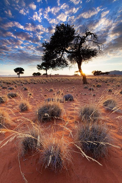 Life in the most unexpected places. Namib Rand Nature Reserve, Namibia