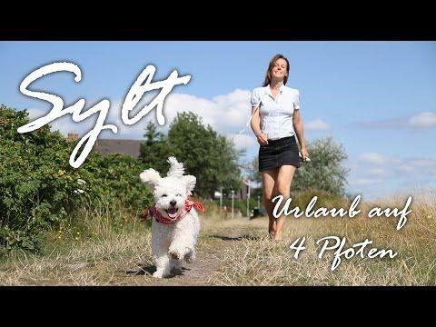 Urlaub mit Hund auf Sylt - hundefreundliche Unterkünfte: