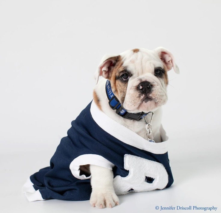 Butler Blue III, stop being so cute!