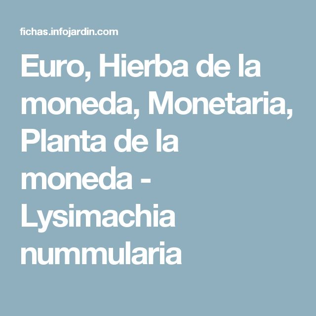 Euro, Hierba de la moneda, Monetaria, Planta de la moneda - Lysimachia nummularia