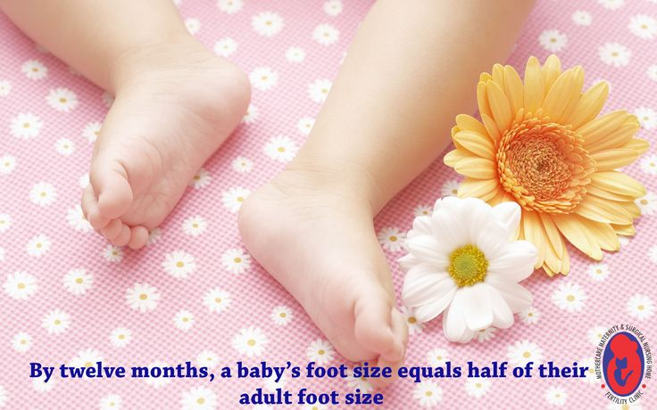 By twelve months, a baby's foot size equals half of their adult foot size