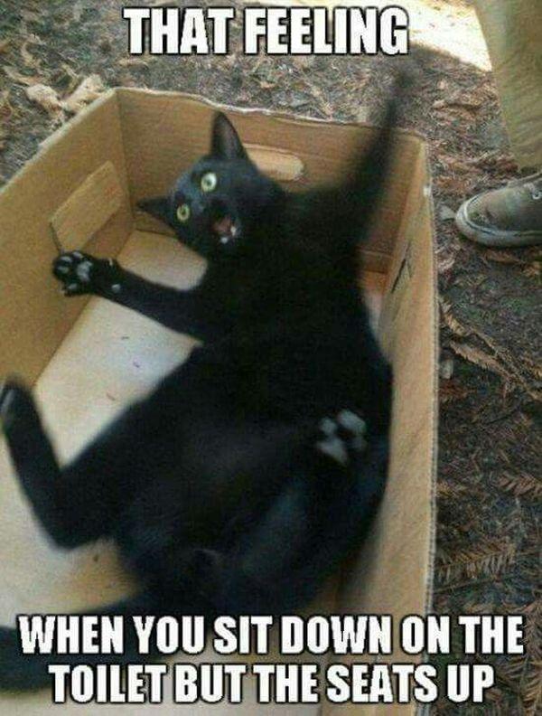 Hilarious Cat Memes 2018 Funny Cat Memes Cute Cat Memes When Memes
