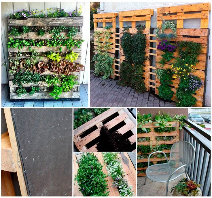 25 best Plantas Suculentas images on Pinterest Gardening, Balcony