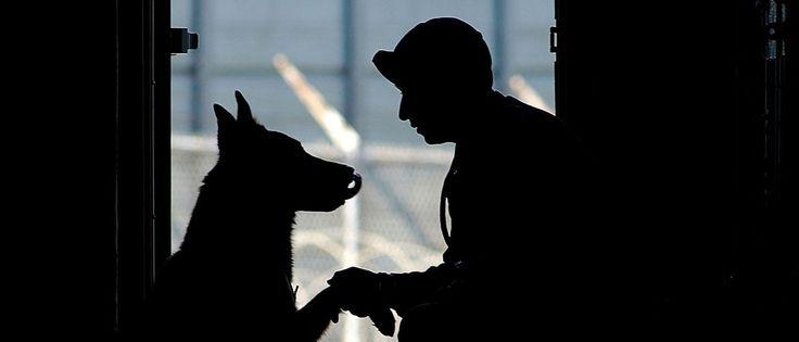 InfoNavWeb                       Informação, Notícias,Videos, Diversão, Games e Tecnologia.  : Cão policial impede fuga de traficante e ajuda a l...
