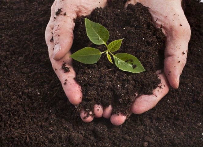 A good quality soil is the basic necessity and the key to success for any garden. Whether you are a beginner or an expert you ought to know certain aspects about soil and how to improve its quality for a happy gardening experience