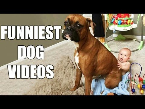 Try Not To Laugh Challenge Funny Dogs Compilation [MUST SEE] Funny Dog Videos & Vines 2016