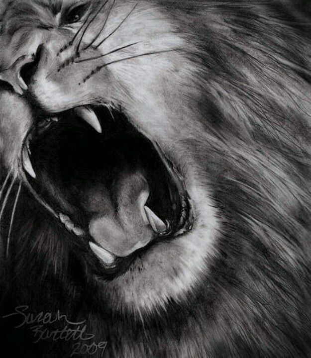 Great lion drawing | Art ideas | Pinterest | Drawings ...
