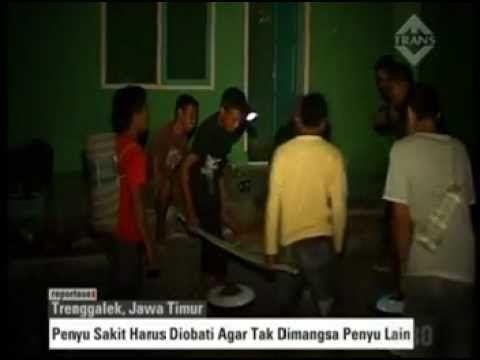 Taman Kili Kili  Menjemput Fajar  Panggul Trenggalek Jatim   Indonesia