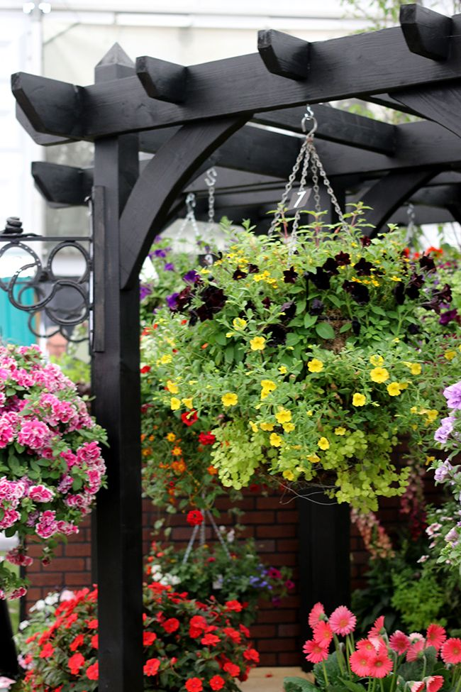 black pergola with hanging baskets More