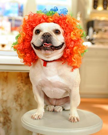 DIY Felt Dog Wig for Halloween - Martha Stewart Pets