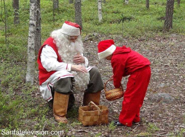 Santa Claus picking superlichens with an elf in Lapland