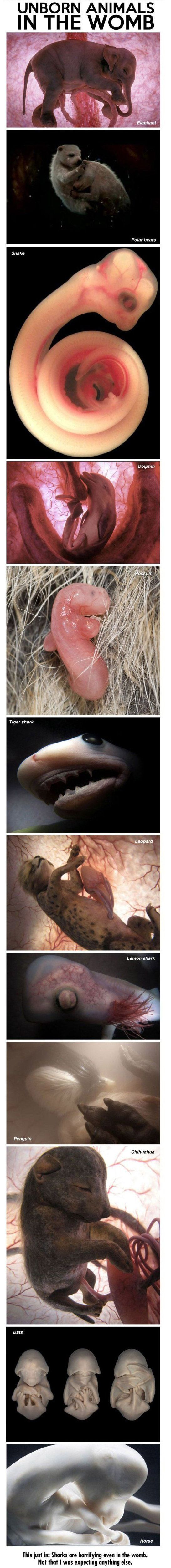 These images were created for a National Geographic special called In The Womb: Animals by Producer Peter Chinn. He used a combination of ultrasound technology, tiny cameras, and computer design to create these incredible images that replicate what fetal animals look like.